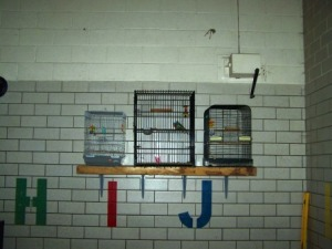 1 doggie supervisor, 1 macgyver, 1 heavy wood slab & 4 brackets later ... and the birds have a new home.
